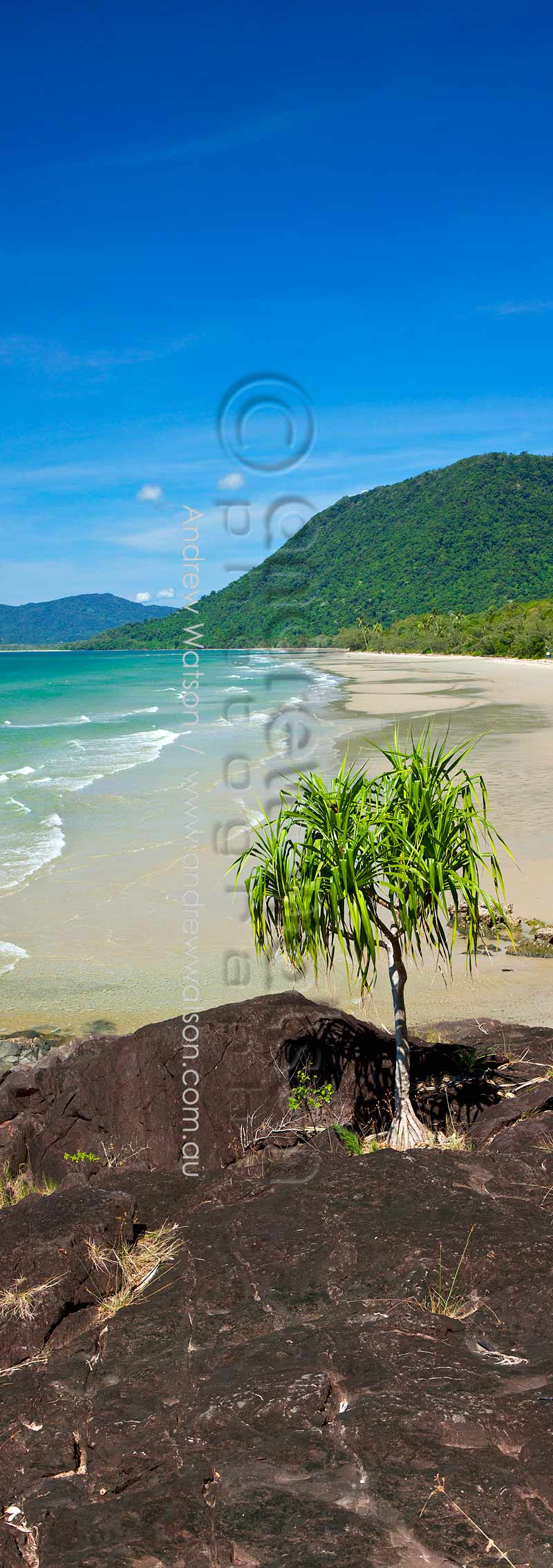 Pandanus palm overlooking Noah's BeachDaintree National Park, North QueenslandImage available for licensing or as a fine-art print... please enquire