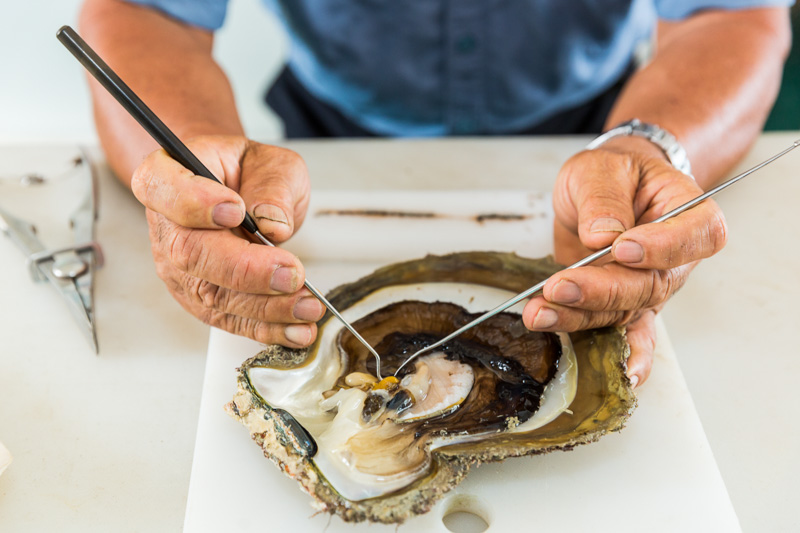 A man removing a pearl from an oyster shell, Torres Strait Islands