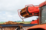 Potatoes being harvested by a mechanical harvester, Atherton Tablelands