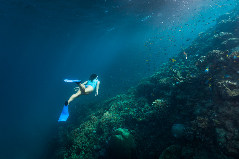 Female snorkeller below the surface swimming amongst the coral and fishlife of the Great Barrier Reef