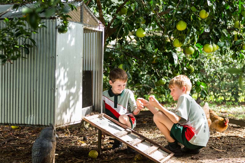 Two young male students collecting eggs from the school chicken coup