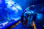 Visitors viewing fishlife through underwater tunnels at the Cairns Aquariusm during RMO Society Ball 2018