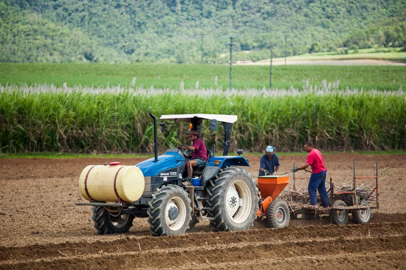 Workers on tractor planting sugar cane plants in the fields, Cairns