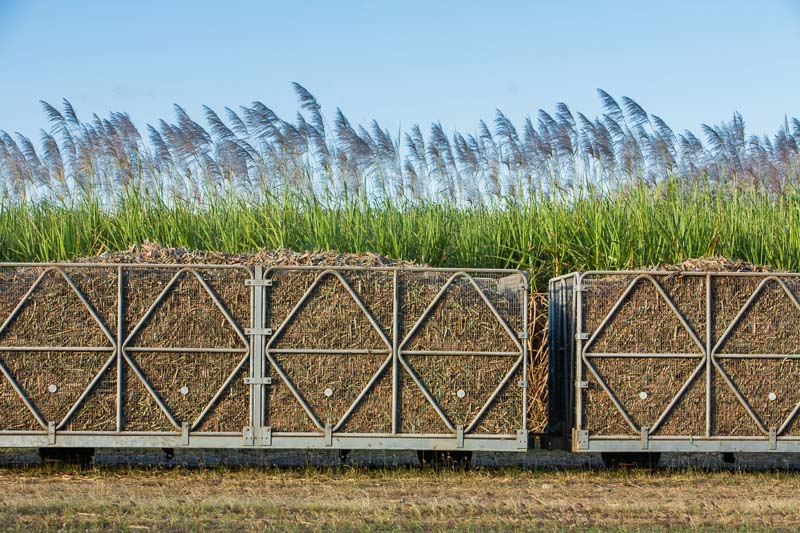 Cane train bins loaded with fresh cut sugar cane with sugar cane field behind, Cairns