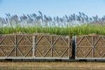 Cane train bins loaded with fresh cut sugar cane with sugar cane field behind, Cairns