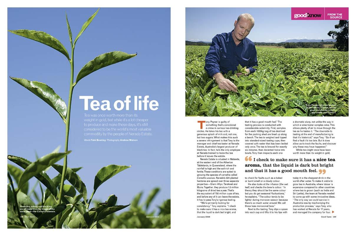 Magazine Photography - Nerada Tea plantation, Atherton Tablelands.  Inside story for Good Taste magazine.