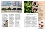 Magazine Photography - Nerada Tea plantation, Atherton Tablelands.  Inside story for Good Taste magazine.