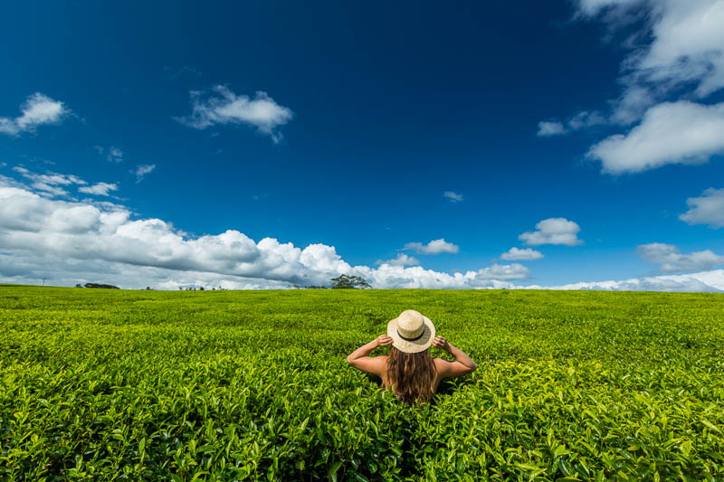 Woman standing in the tea fields of the Atherton Tablelands