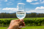 A hand holding a glass of white wine with vineyard in the background