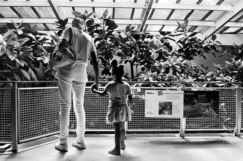BRONX, NEW YORK - JULY 17: Wilfredo {quote}Sugar{quote} Gonzalez views an exhibit at the Bronx Zoo with one of the neighborhood children she cares for, July 17, 2013.