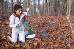 Project assistant Francesca Rubino weighs an eastern grey squirrel on the grounds of the Cary Institute of Ecosystem Studies in Millbrook, New York on November 4, 2016. Photo by Stephen Reiss for NPR.