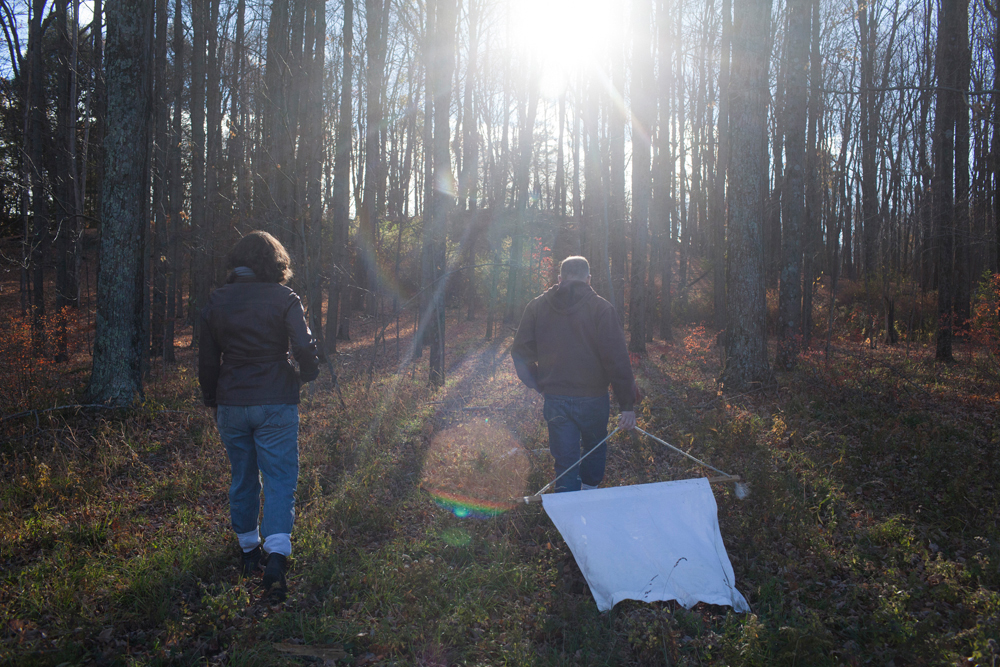 Dr. Richard S. Ostfeld and Dr. Felicia Keesing  search for ticks across the road from the Cary Institute of Ecosystem Studies in Millbrook, New York on November 4, 2016. Photo by Stephen Reiss for NPR.