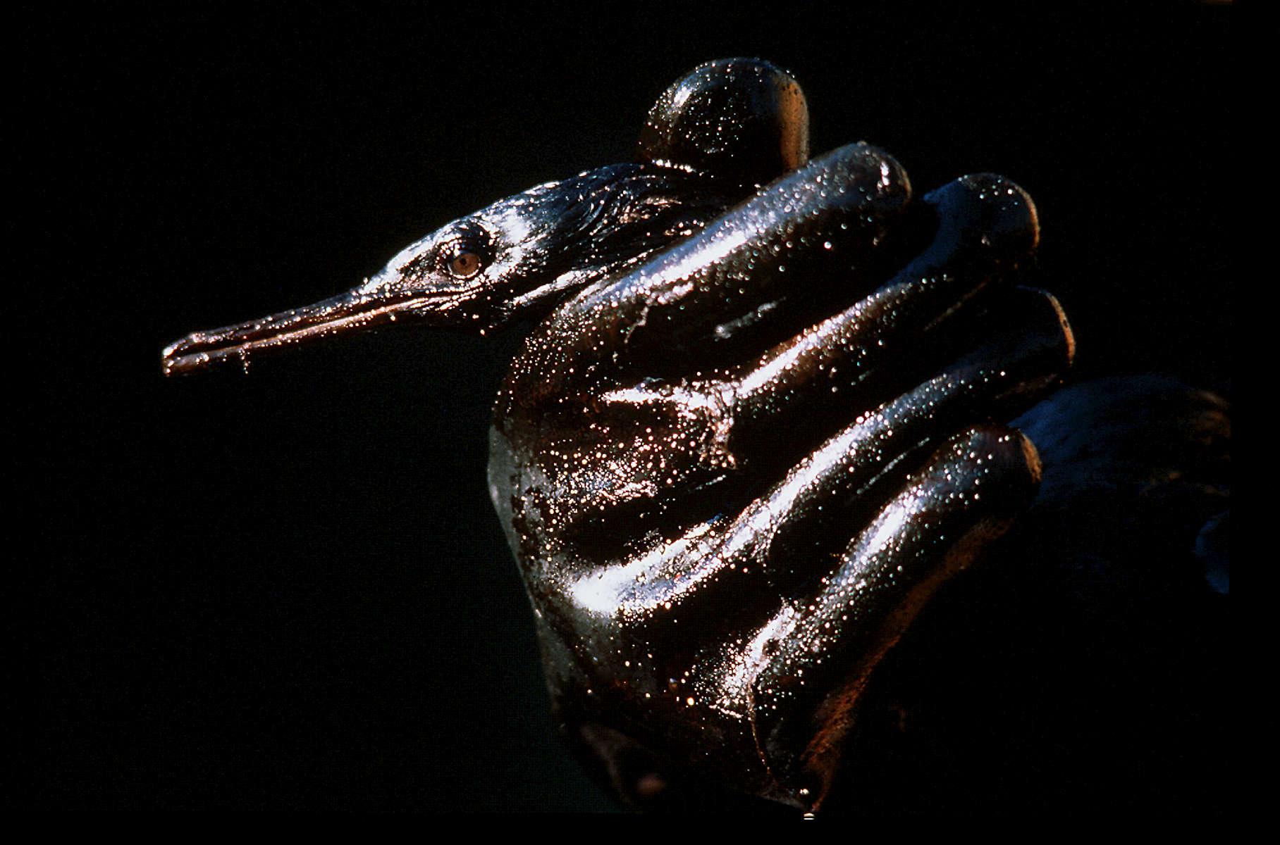 Exxon Valdez oil spill, 1989