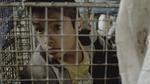 {quote}Ecuador{quote} segment of the SHORT PLAYS project (2014), produced by Daniel Gruenerwith the song Shooting Mambo from {quote}La-33{quote}Segmento de {quote}Ecuador{quote} del proyecto SHORT PLAYS (2014), producido por Daniel Gruenercon la canción Shooting Mambo de {quote}La-33{quote}Football seen through the eyes of some of the best directors of the world. imdb.com/title/tt3863954/guión y dirección - SEBASTIÁN CORDEROproducción - ARTURO YEPEZproductor asociado - OSCAR RAMIREZ GONZALEZelenco - MATEO GONZALEZ (chico 1)NICOLAS ESPINOZA (chico 2)GUSTAVO MOYA (hombre 1)ANGEL GAVILANES (hombre 2)jefatura de producción - CARLA ELIZALDEfotografía - SIMON BRAUERarte - PABLO SECAIRAedición - FELIPE CORDEROdiseño de sonido - ESTEBANOISE BRAUERvestuario - ANA POVEDA, LILA PENAGOSmaquillaje y peluquería - CECILIA LARREAcasting - SOFIA COLOMAupm y locaciones - ALEGRIA TERANprimer asistente de dirección - ARTURO YEPEZsegunda asistente de dirección - SOFIA COLOMAtercer asistente de dirección - MAURICIO SAMANIEGOasistentes de producción - ANA MARIA SANCHEZ, CRISTINA LEDESMAasistente de extras - OLIVIA GARZONasistentes de arte - HUGO AISAGA, EMILIA PATIÑOprimer asistente de cámara A - ANA MARIA ORMAZAprimer asistente de cámara B - DARIO HERRERAsegundo asistente de cámara - JUAN CARLOS CHOPEgaffer - JIMMY PAZMIÑOgrips - JUAN GABRIEL PILLASAGUA, VICTOR BETANCOURT, RICARDO MERO, JOSELITO HUANCAsonido directo - ESTEBANOISE BRAUERAgradecimientos especiales -Sergio Mejía y La-33Asociaciones del Mercado de San RoqueFelix SorianoNicolás PlatanofUPC de San RoqueFilmado en Quito, Ecuador