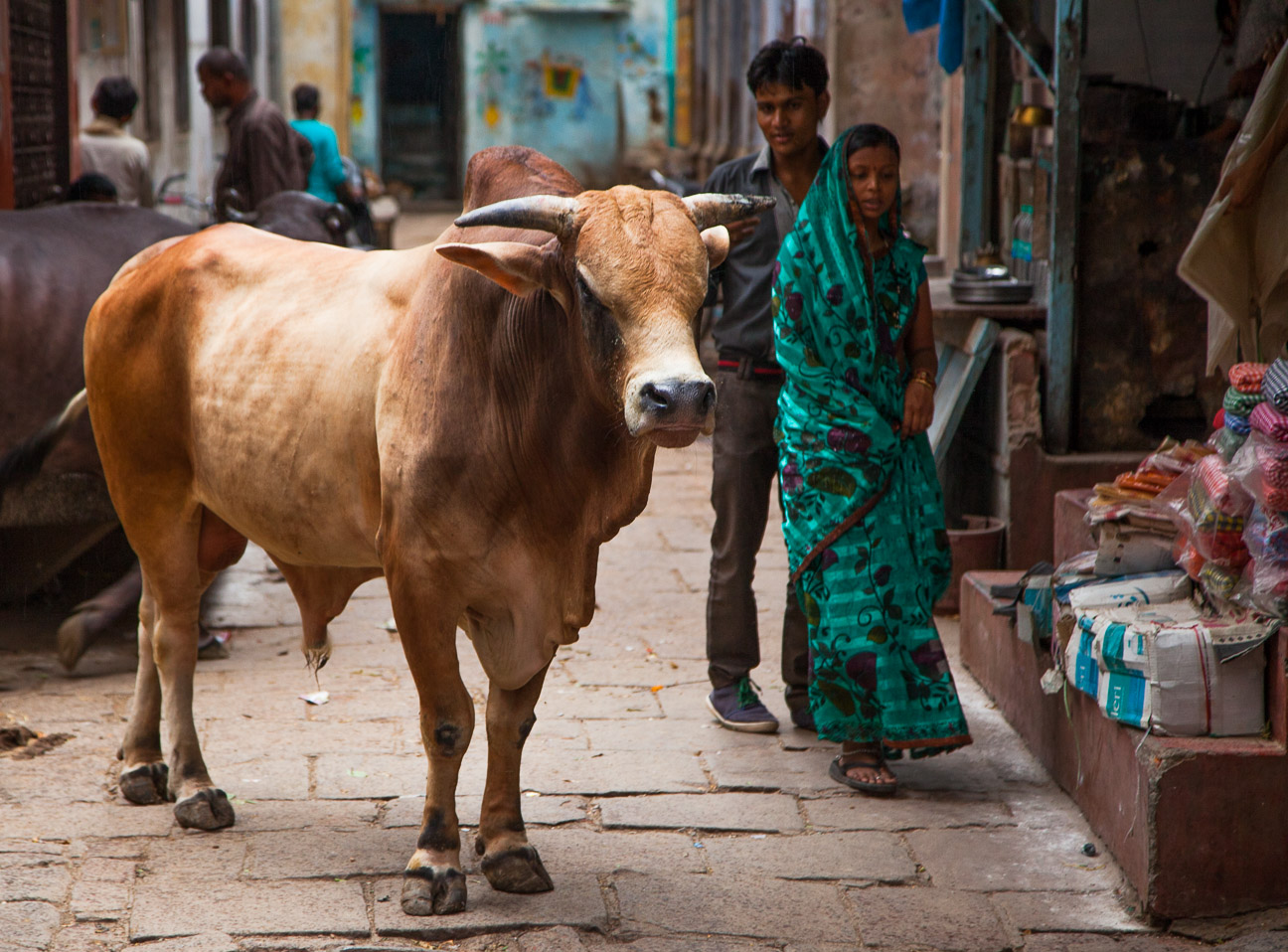 This big fellow commanded some respect in the ghats (alleyways) of Varanasi.