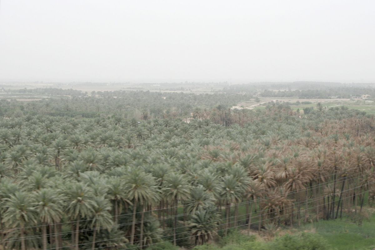 Date palms were a common sight.