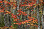 The beautiful fall color of Acadia National Park