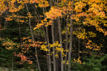 Acadia_Maine_05