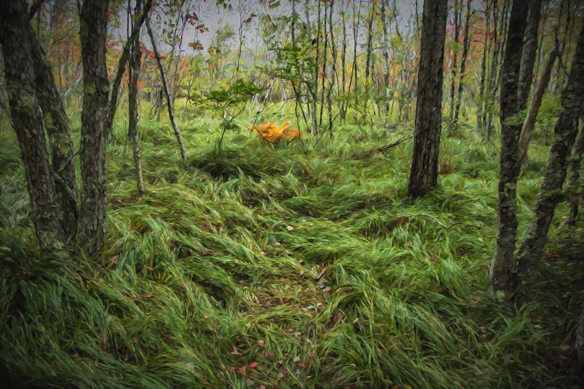 Acadia_Maine_38