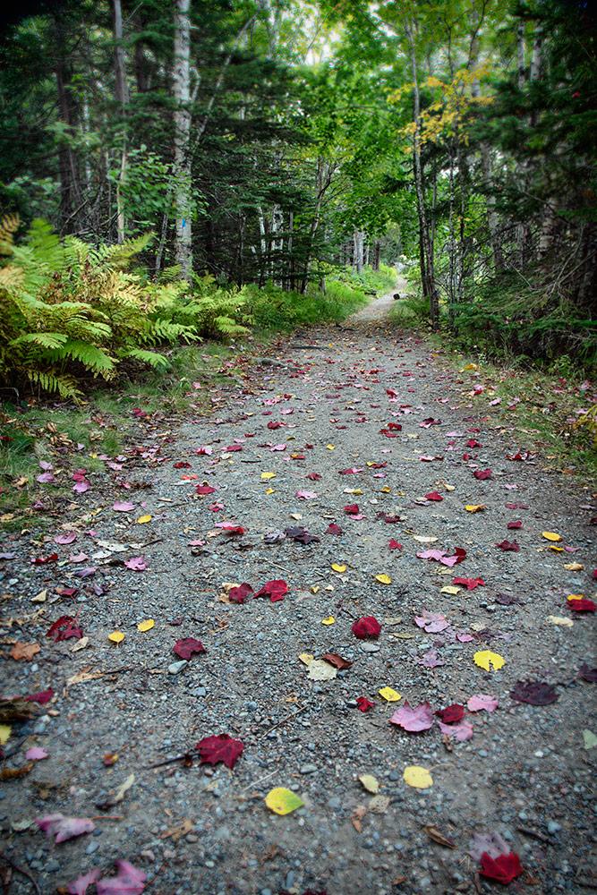 Acadia_Maine_51