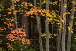 Acadia_Maine_56