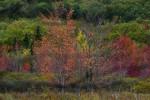 Acadia_Maine_60