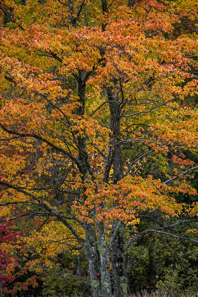 Acadia_Maine_65