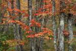 Acadia_National_Park_2013_2014_011