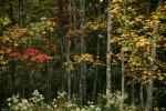 Acadia_National_Park_2013_2014_015