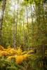 Acadia_National_Park_2013_2014_023