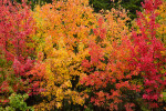 Acadia_National_Park_2013_2014_026