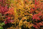 Acadia_National_Park_2013_2014_027