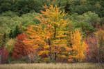 Acadia_National_Park_2013_2014_041