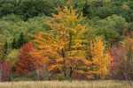 Acadia_National_Park_2013_2014_042