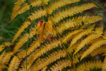 Acadia_National_Park_2013_2014_043