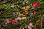 Acadia_National_Park_2013_2014_045