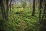 Acadia_National_Park_2013_2014_057