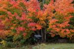 Acadia_National_Park_2013_2014_059