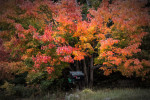 Acadia_National_Park_2013_2014_060