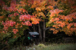 Acadia_National_Park_2013_2014_062