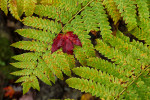 Acadia_National_Park_2013_2014_065