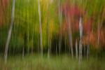 Acadia_National_Park_2013_2014_066