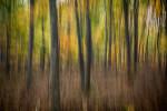 Acadia_National_Park_2013_2014_071