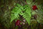 Acadia_National_Park_2013_2014_073