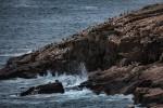 Acadia_National_Park_2013_2014_077