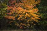 Acadia_National_Park_2013_2014_092