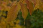 Acadia_National_Park_2013_2014_098