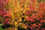 Acadia_National_Park_2013_2014_100