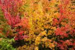 Acadia_National_Park_2013_2014_101