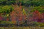 Acadia_National_Park_2013_2014_103